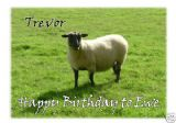 Personalised Sheep Greetings Card